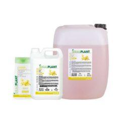 Shampoo all'olio di oliva e foglie di the