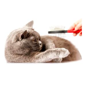 articolo per gatti in toelettatura