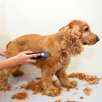 Tosatrici per cani: quale tosatrice per cani scegliere
