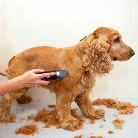 tosatrice per cani