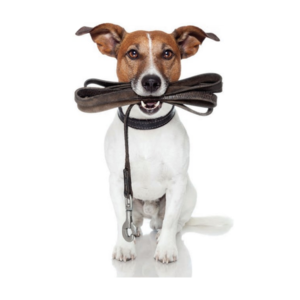 linea pet articoli per cani e gatti