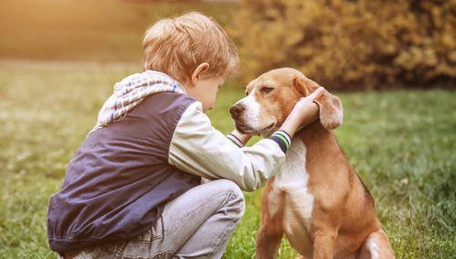 SPA per cani