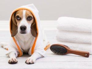 kit asciugatura cani