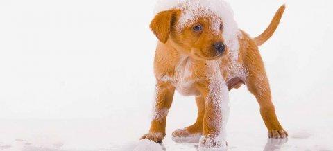 toelettature-per-cani-cuccioli