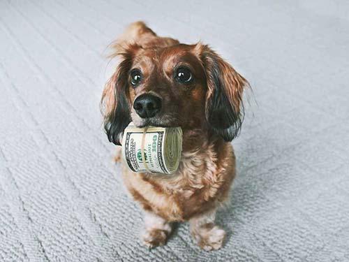 Investimento-iniziale per un pet shop