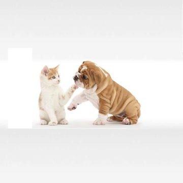 Pet-shop copertina