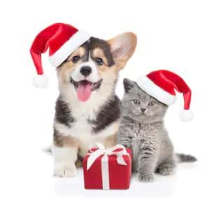 Regali-per-cani e gatti