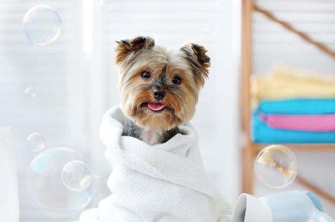 Copertina shampoo per cani piccola