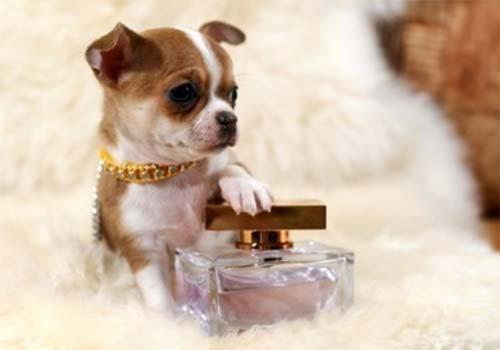 miglior profumo per cani