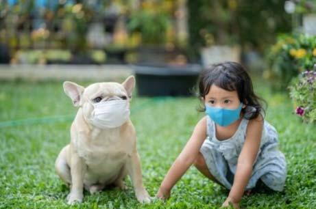 Cani Corona Virus