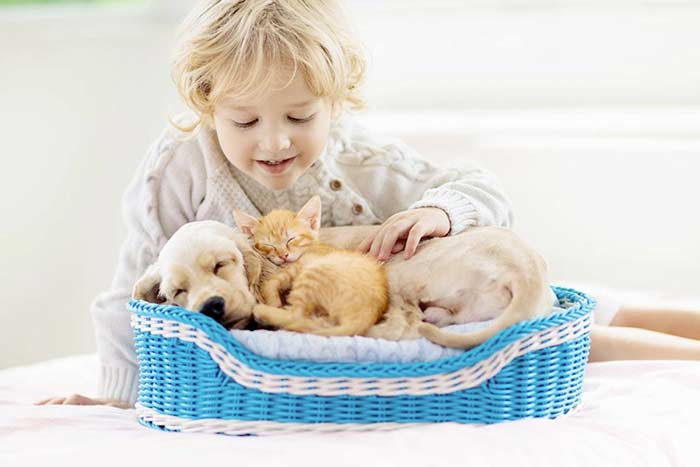 Cani e gatti corona virus