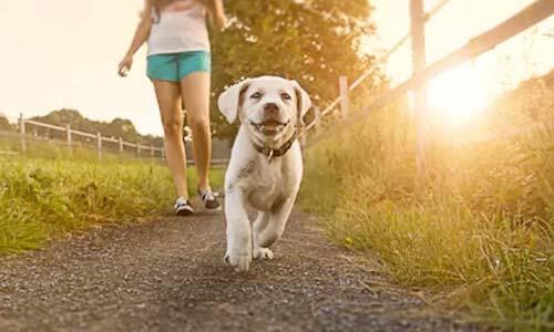 Cani in toelettatura