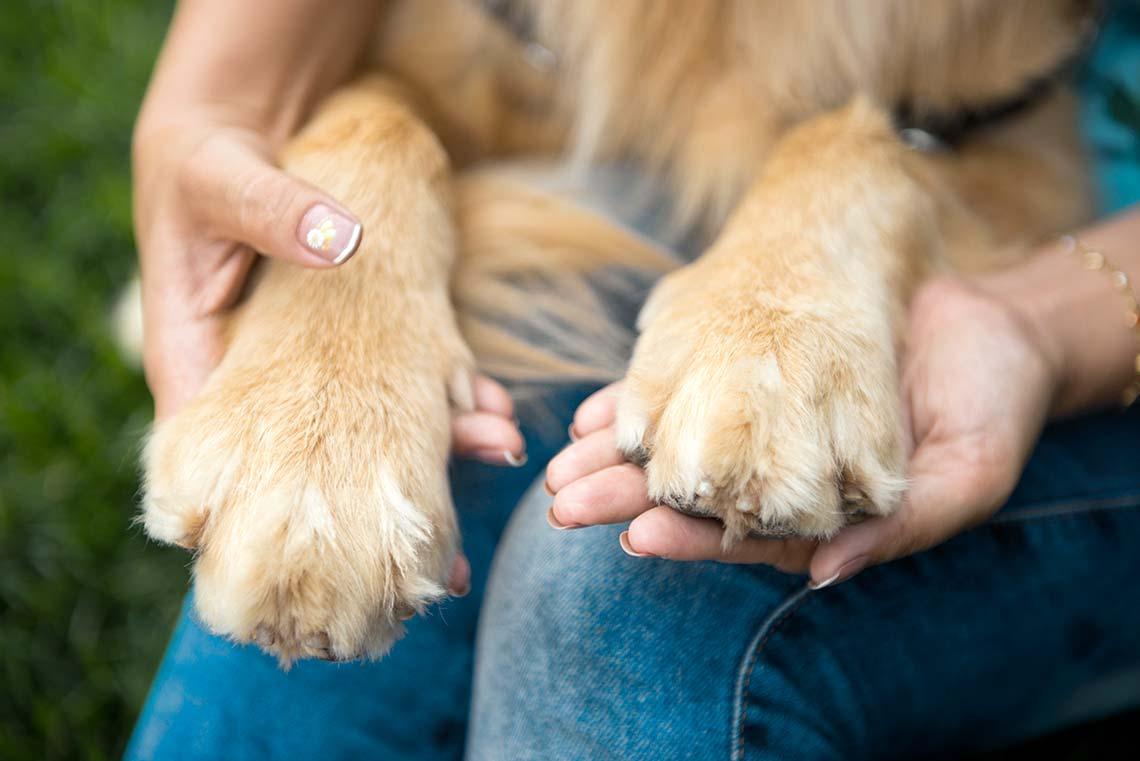 Zampe cane copertina